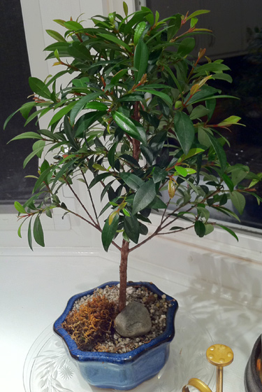 plants with names: bonsai needs a name!