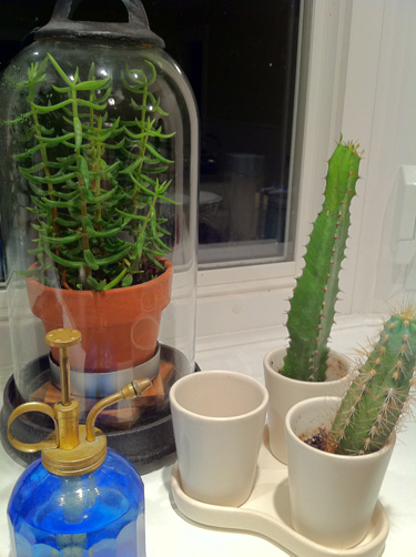 plants with names: spike, fred, george